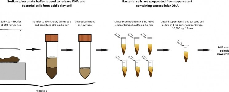 Indirect Dna Extraction Method Suitable For Acidic Soil With High Clay Content Novialia